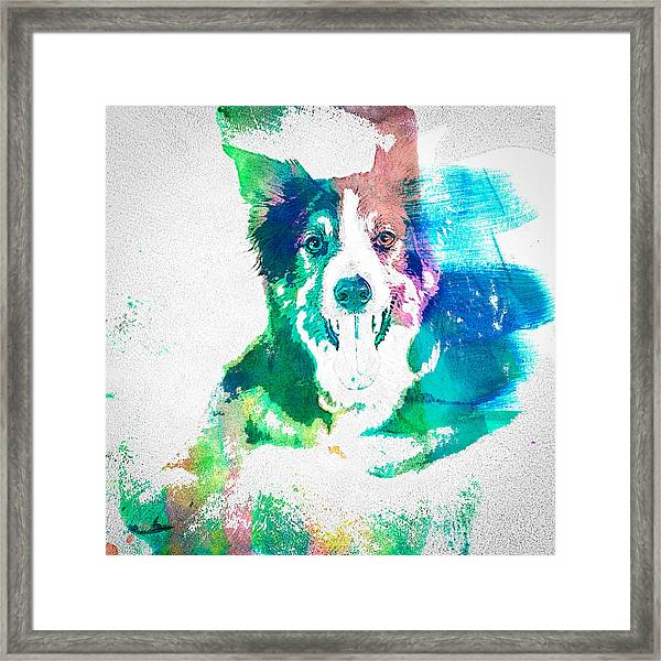 Border Collie - Wc Framed Print