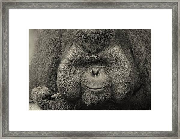 Bornean Orangutan II Framed Print