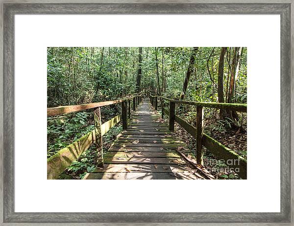 Borneo Jungle Framed Print