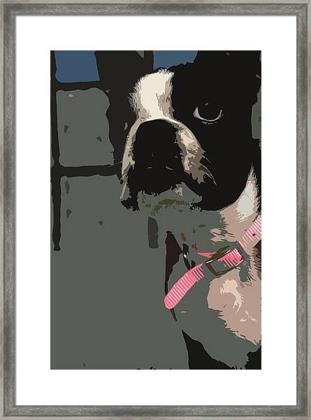 Boston Terrier Art01 Framed Print