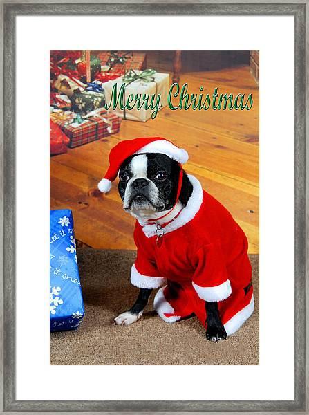 Boston Terrier Christmas Framed Print