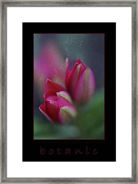 Botanic Framed Print