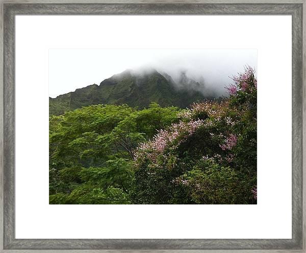 Botanical Garden View Framed Print