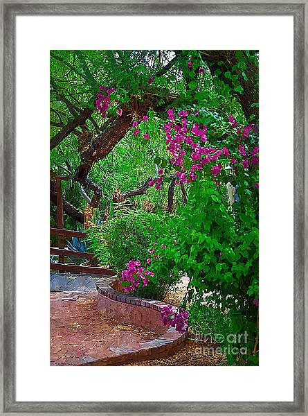 Bougainvillea In The Courtyard Framed Print