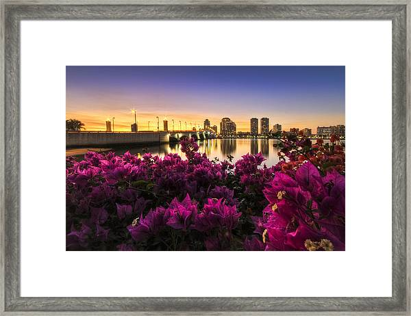 Bougainvillea On The West Palm Beach Waterway Framed Print