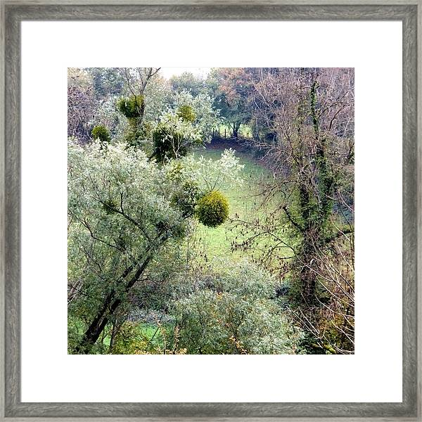 Mistletoe Ball Framed Print
