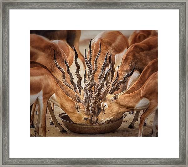 Bouqet Of Horns Framed Print
