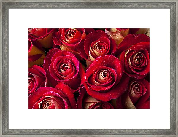 Boutique Roses Framed Print