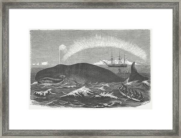 Bowhead Whale Is Hunted, Wood Framed Print