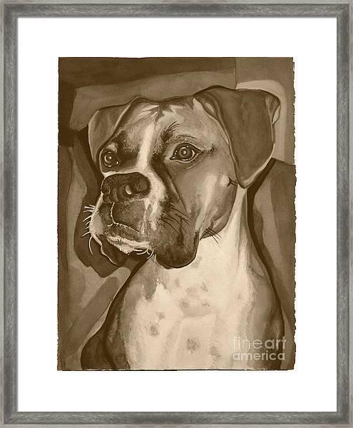 Boxer Dog Sepia Print Framed Print