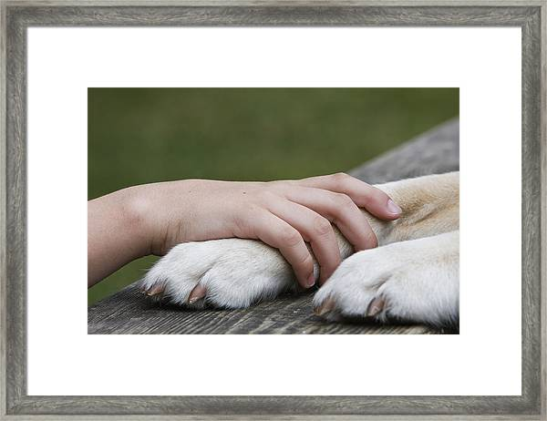 Boy's Hand Resting On His Dog's Paw Framed Print by Compassionate Eye Foundation/Jetta Productions