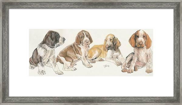 Bracco Italiano Puppies Framed Print