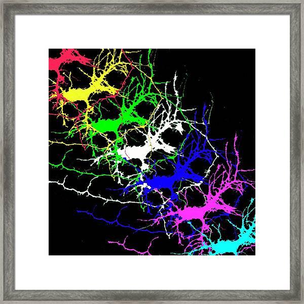 Brain Activity Framed Print by Dr. Chris Henstridge