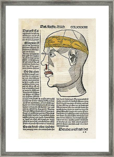 Brain Functions And Senses Framed Print