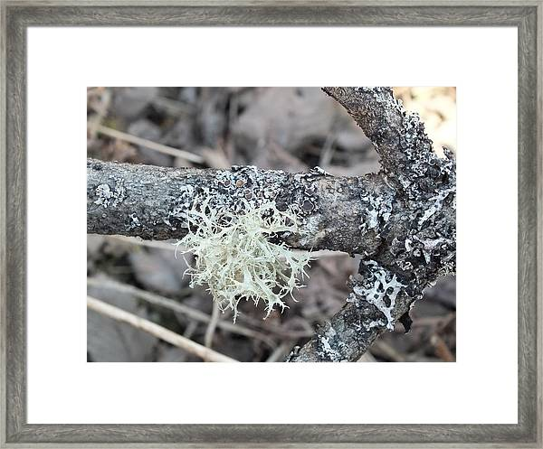 Branch Framed Print by Gene Cyr