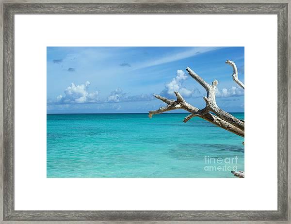 Branch Over The Caribbean Framed Print