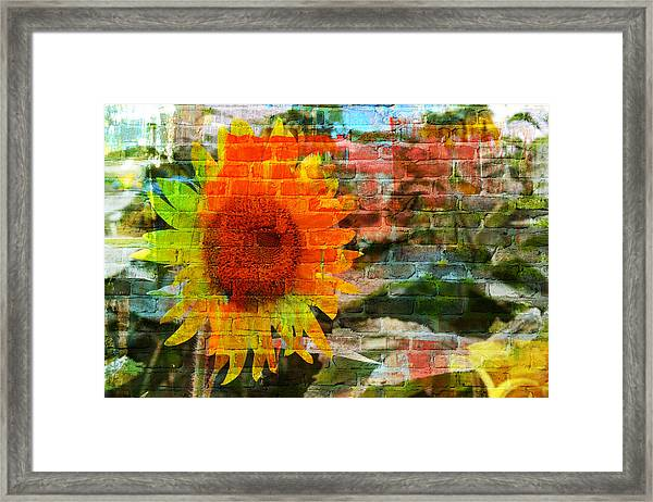 Bricks And Sunflowers Framed Print