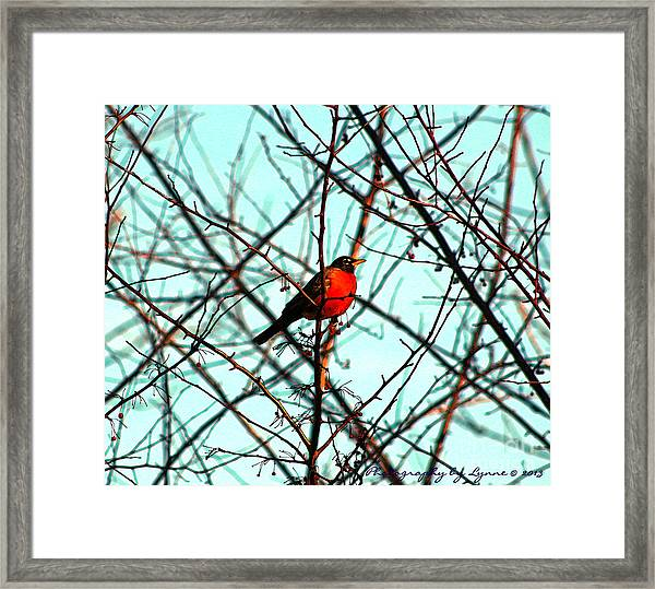 Bright Red Robin Framed Print