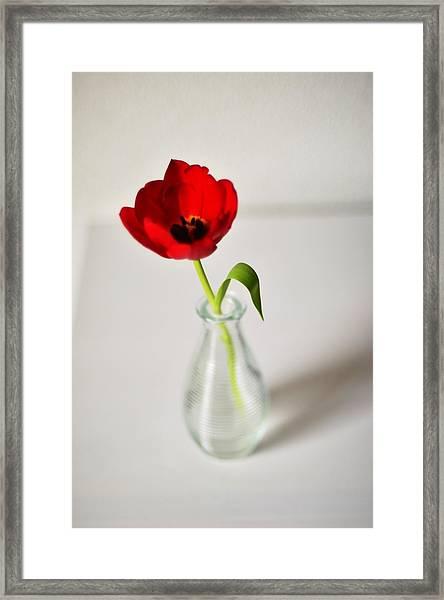 Bright Red Tulip In Small Vase Framed Print