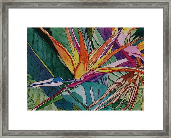 Brillant Bird Of Paradise Framed Print