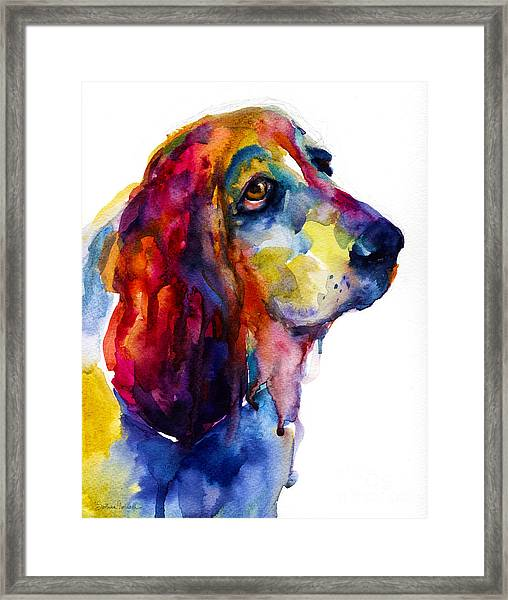 Brilliant Basset Hound Watercolor Painting Framed Print