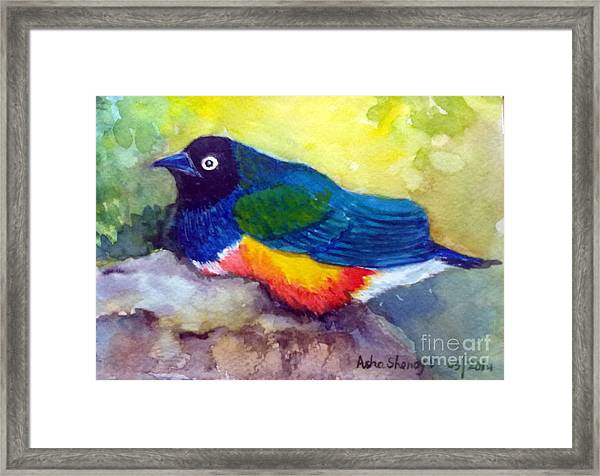 Brilliant Starling Framed Print