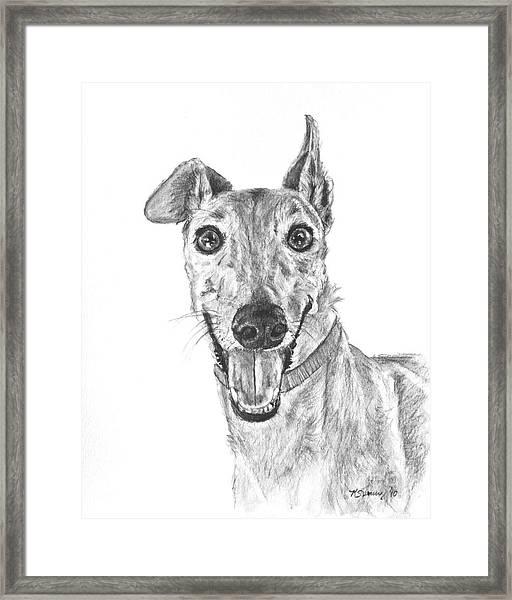 Brindle Greyhound Close Up Portrait Framed Print