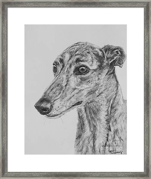 Brindle Greyhound Face In Profile Framed Print