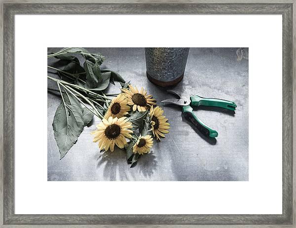 Bringing Blooms Indoors Framed Print