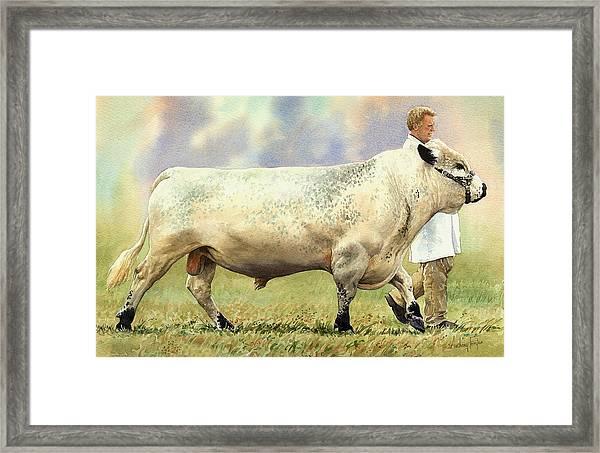 British White Bull Framed Print