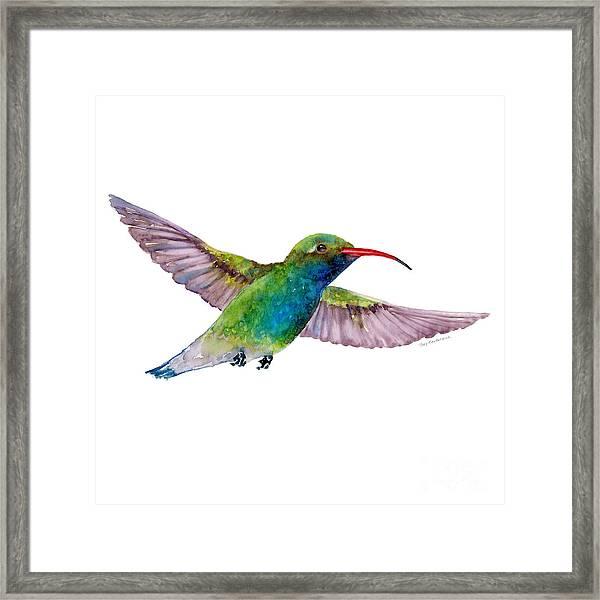 Broad Billed Hummingbird Framed Print