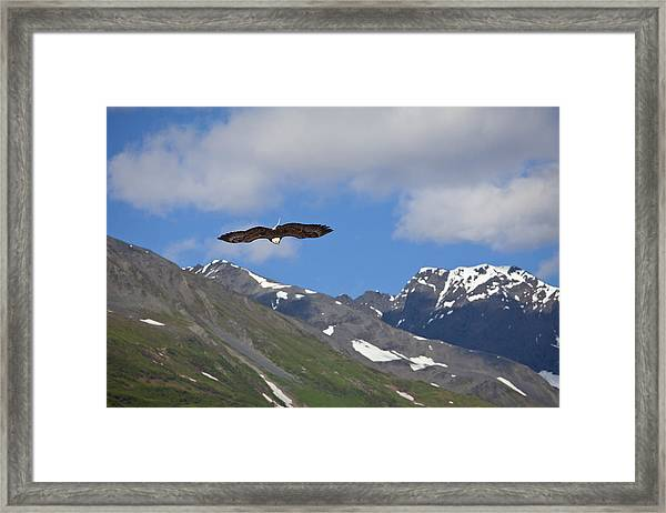 Broad Wings In The Mountains Framed Print by Tim Grams