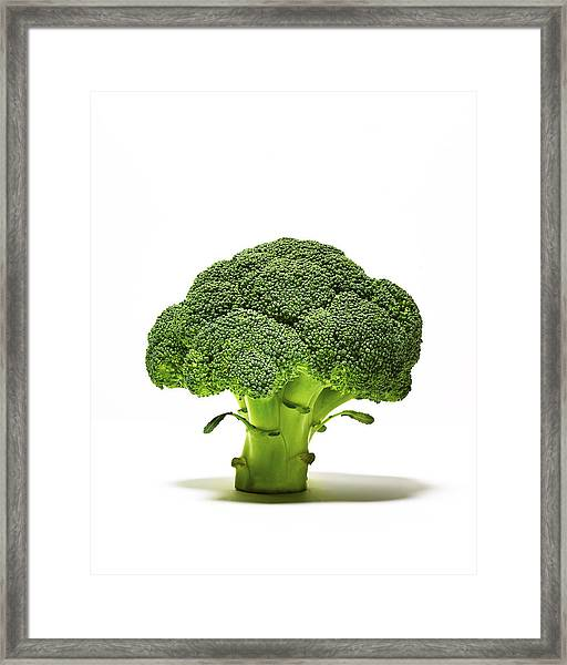 Broccoli Head On Whte Background Framed Print by TS Photography
