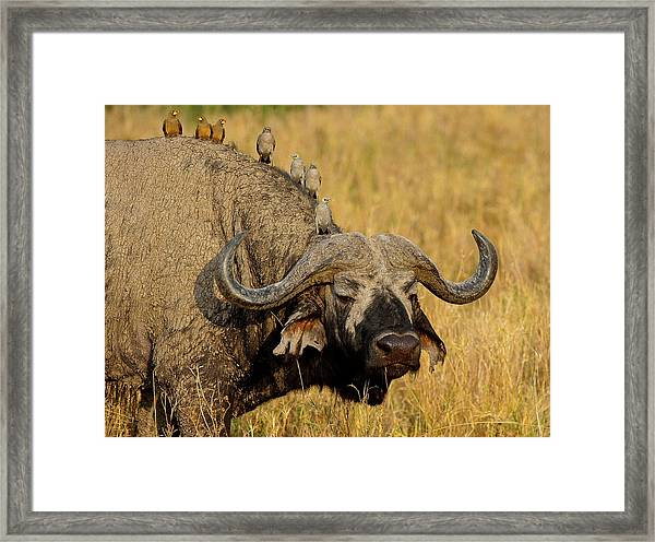 Brochette Framed Print by Marc Pelissier