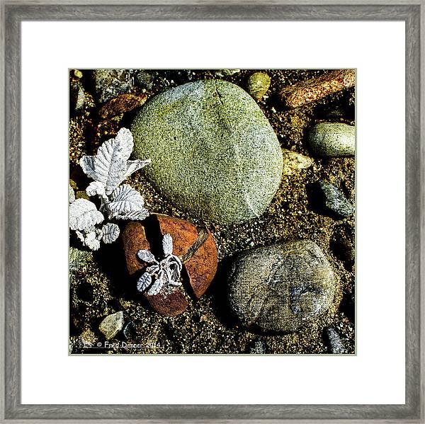 Broken Rock Dryas Framed Print