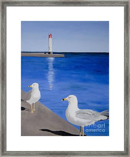 Bronte Lighthouse Gulls In Oil Framed Print