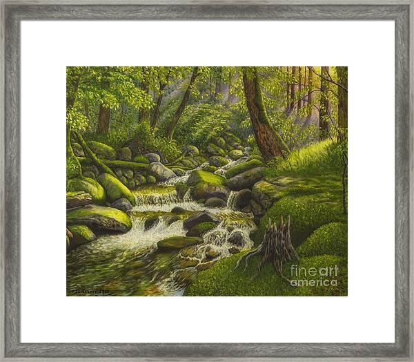 Brook In The Forest Framed Print