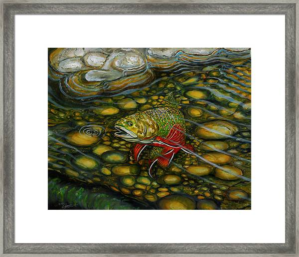 Brook Trout Framed Print