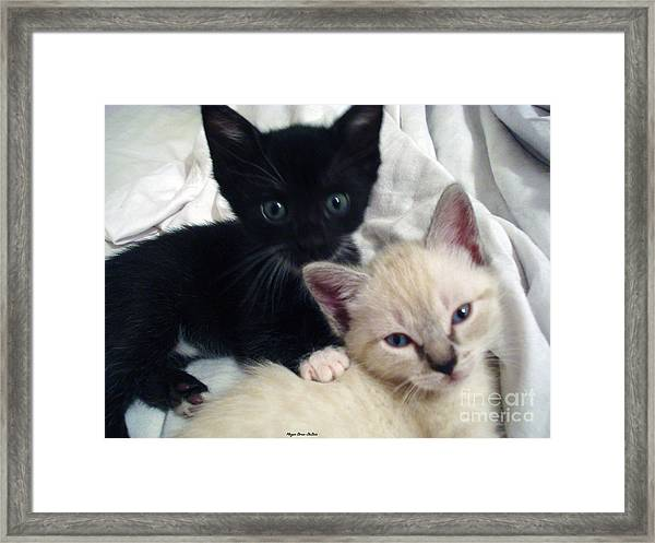 Brother N Sister Kittens Framed Print