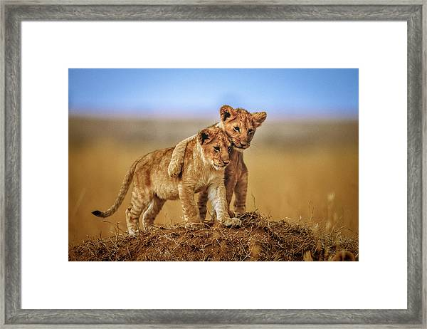 Brothers For Life Framed Print