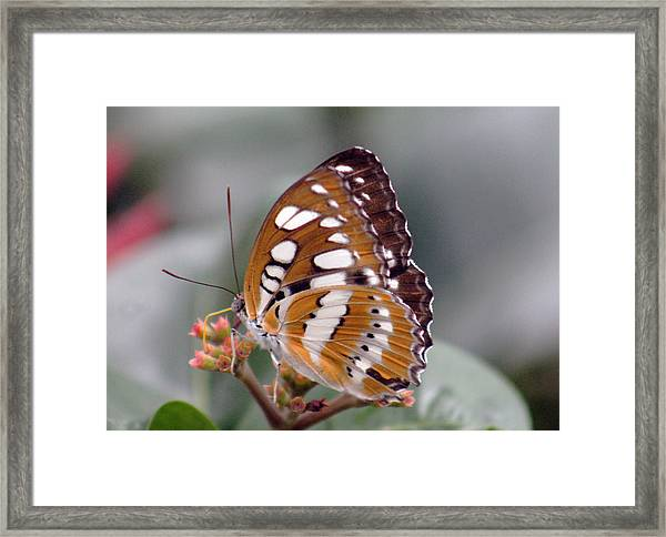 Brown And White Brushstrokes Framed Print