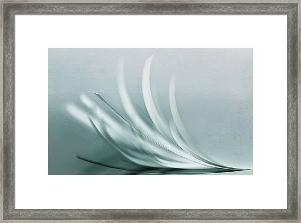 Browse Framed Print by Jutta Kerber
