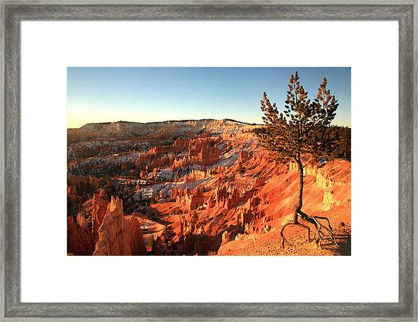 Bryce Canyon Framed Print by Darryl Wilkinson