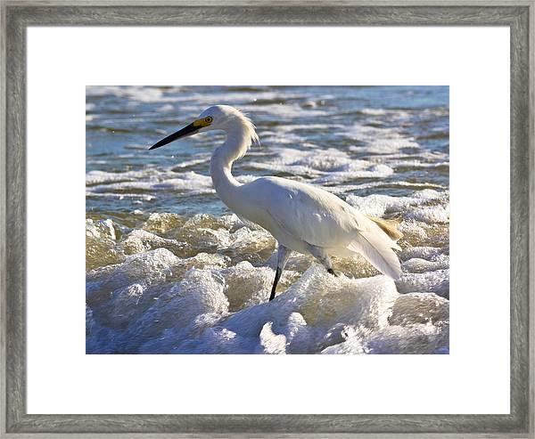 Bubbles Around Snowy Egret Framed Print