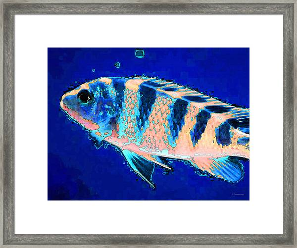 Bubbles - Fish Art By Sharon Cummings Framed Print