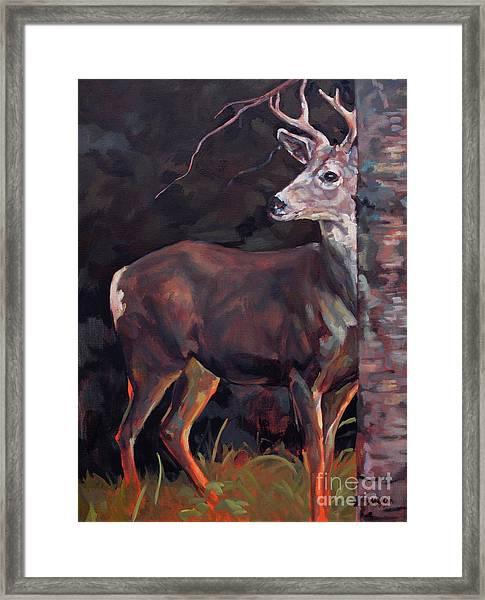 Buck At Sullivan Framed Print