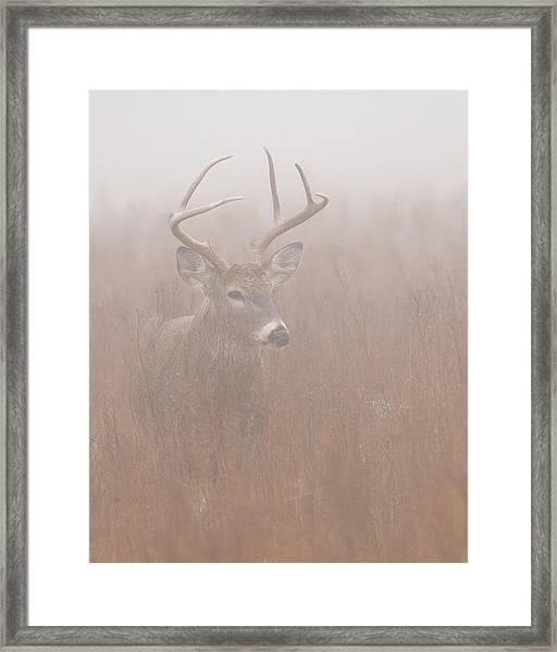 Buck In Fog Framed Print