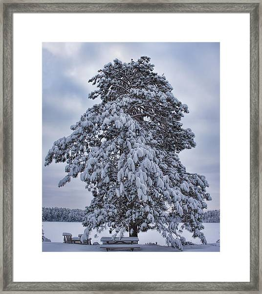 Buck Lake Flocked Pine Framed Print