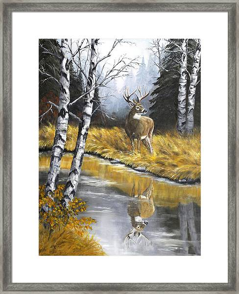 Buck Reflection Framed Print