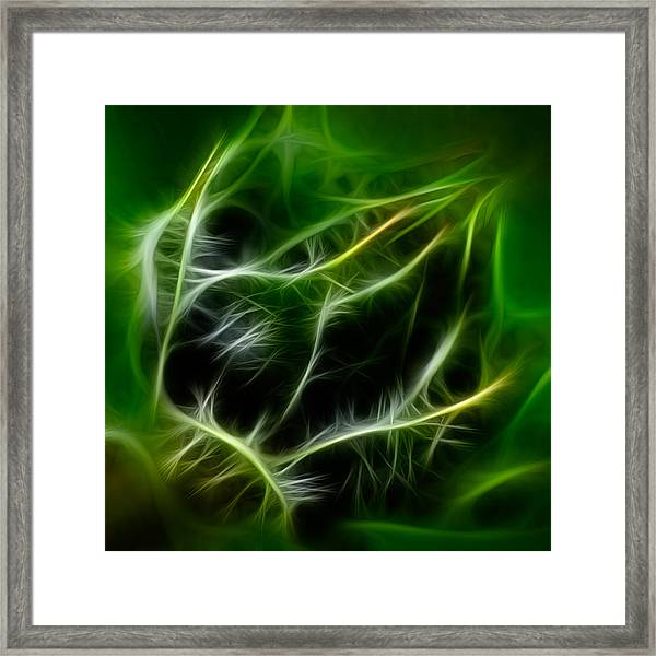 Budding Beauty Framed Print